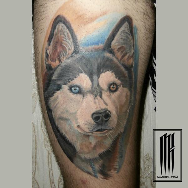 собака породы хаски